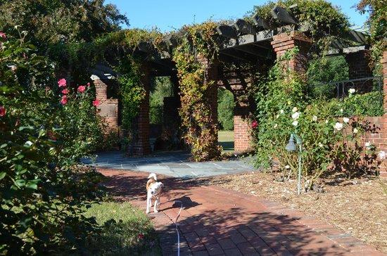 Hermitage Museum and Gardens : Rose Garden