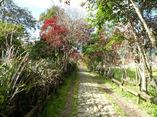Hostal Selva y Café: Jardin