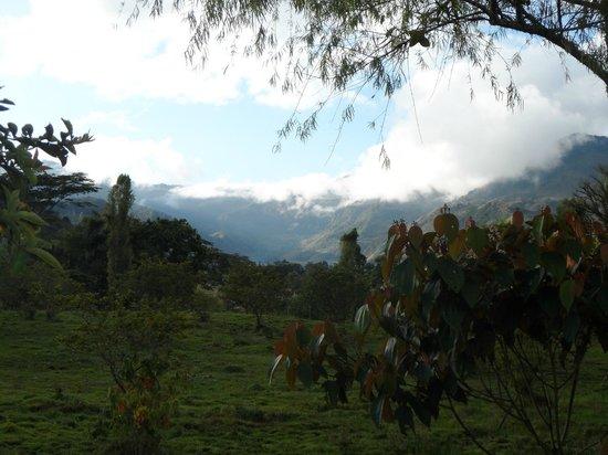 Hostal Selva y Café: View from Hostal Selva y Cafe