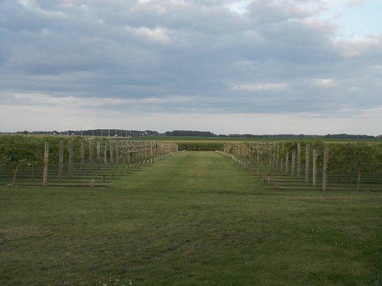 Four Daughters Vineyard & Winery: Four Daughters Vineyard