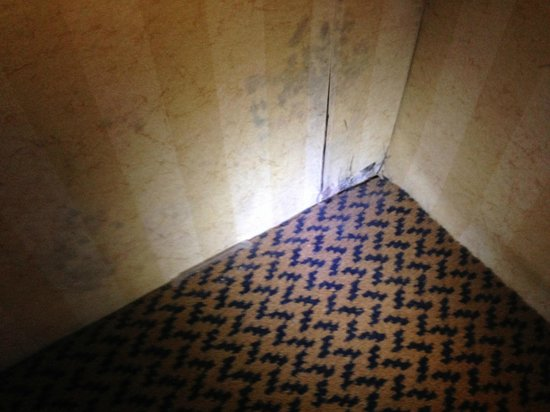 Crowne Plaza Hotel Madison: Black mold
