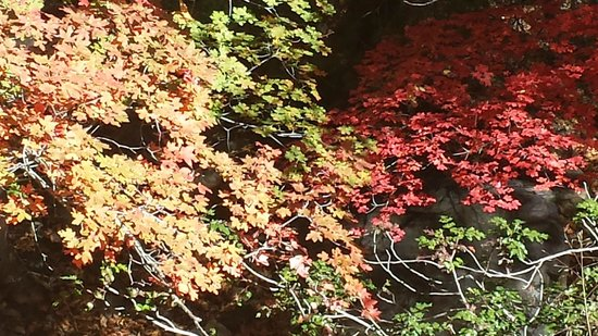 Ramsey Canyon Preserve: fall rainbow