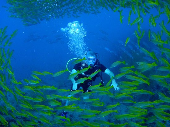 Discovery Dive Centre: the under world's, amazing colors