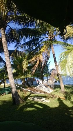 Gulf View Waterfront Resort: Good thing I didn't nap in the hammock!