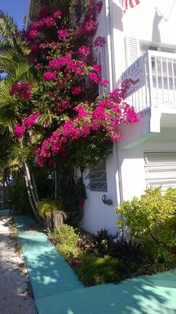 Gulf View Waterfront Resort : Beautiful flowering tree by our room