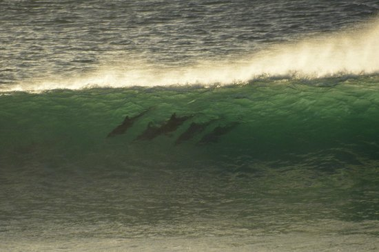 African Perfection Jeffreys Bay: surfing dolphins- from our balcony