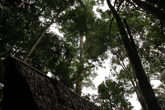 Belum Eco-Resort Sdn.Bhd. : rope system in the trees