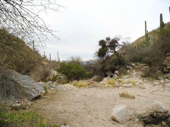 Pima Canyon: Looking down the canyon.
