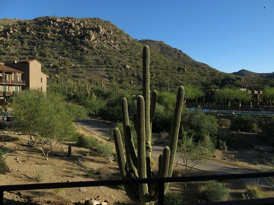The Ritz-Carlton, Dove Mountain: view from our room - pool, mountain and the gorgeous blue sky
