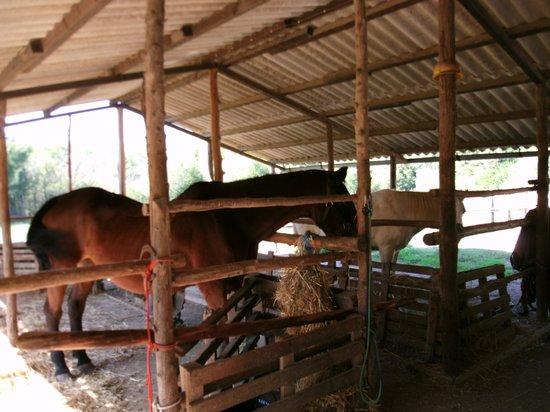 Trailriders Horse Trekking: horses at stable