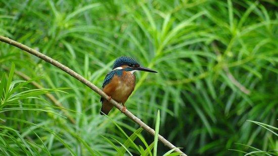 Taj Exotica Goa: We saw this at the Koi Pond