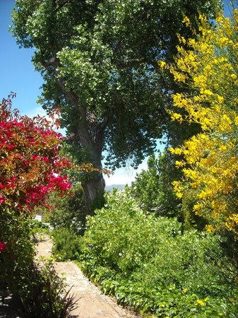 Albourne Boutique Guest House : Well tended indigenous gardens