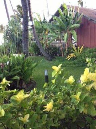 Kahana Village: gardens