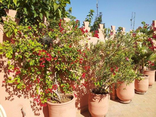 Dar Amanza: La terrasse