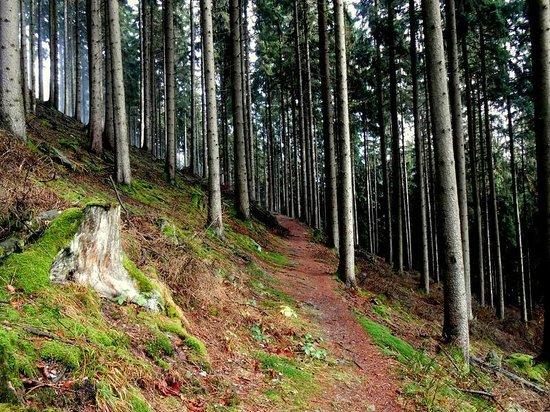 Scninkenwirt Waldhotel: Wanderweg zum Wasserfall von Wasserfall aus
