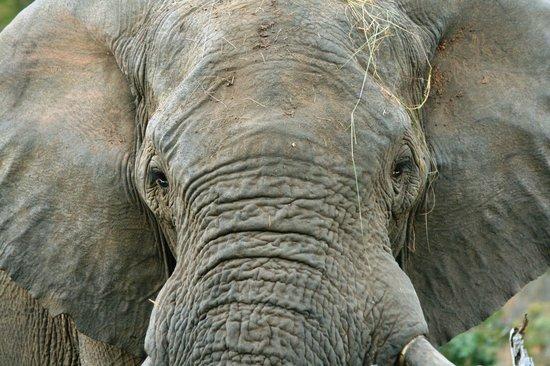 Makweti Safari Lodge: Wonderful viewing of elephants