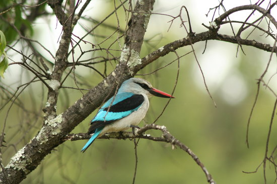 Makweti Safari Lodge: Migratory birds return to the reserve in summer