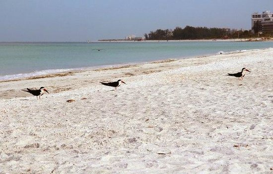 Sandcastle Resort at Lido Beach : пляж