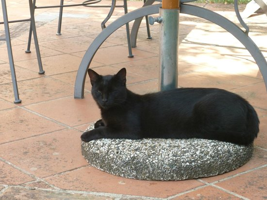 IL TORRINO Country Resort: More cats