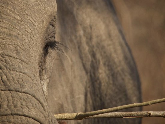 Ulusaba Safari Lodge : Elephant