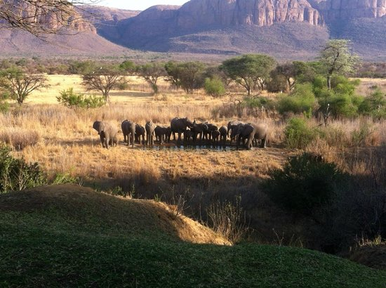 Marataba Safari Lodge: View from hotel garden and rooms
