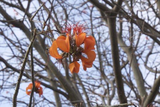 Pousada Aleffawi: Local flower,special to the island