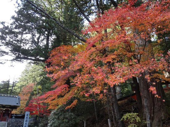 Taiyuimbyo Shrine: 大猷院  紅葉