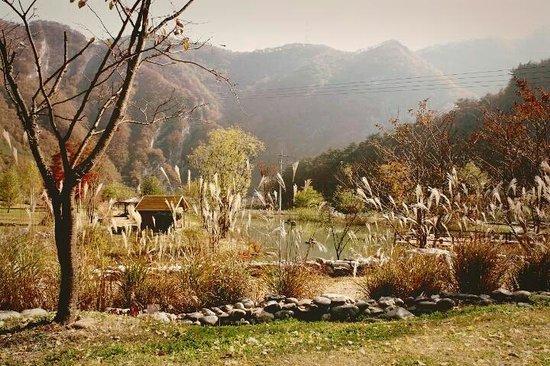 Arii Hills (Byeongbangchi) Sky Walk & Zipline