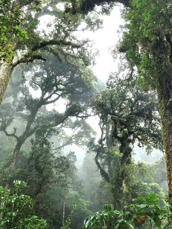 Sendero Los Quetzales (The Quetzales Trail) : Cloud forest