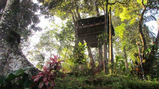 Ela Ecoland Nature Retreat: tree house