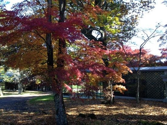 Karuizawa Prince Hotel West: fall color