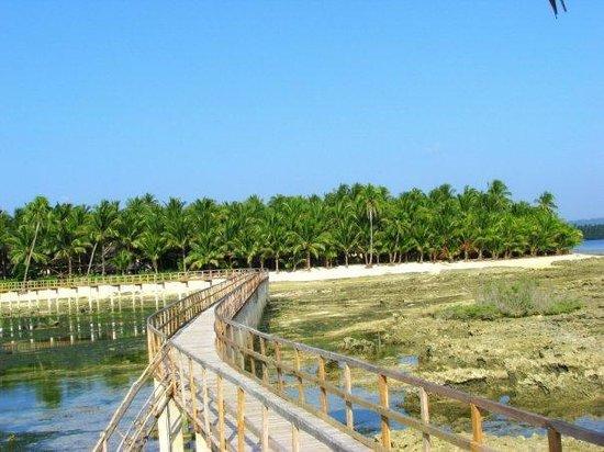 Ocean 101 Cloud 9 Surf Resort : view fron the wooden bridge