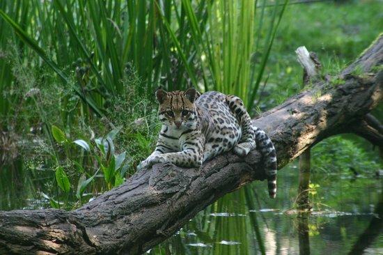 Aqua Zoo Friesland