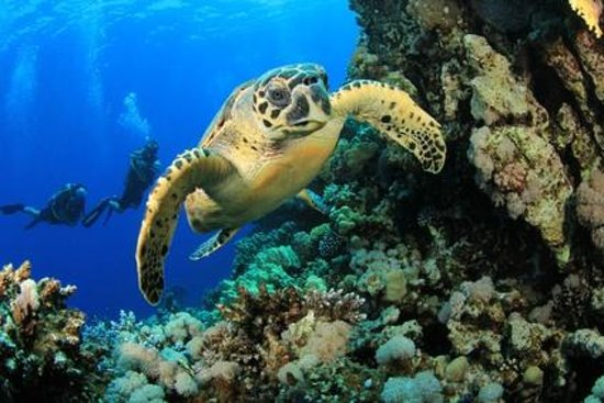 Calypso Plongée : gwadaloisirs plongée GLP diving
