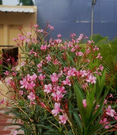 Hanu Reddy Residences Poes Garden: Flowers!!