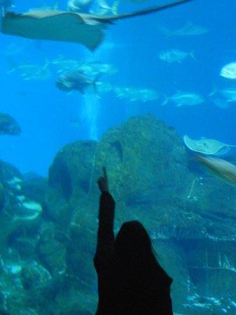 Adventure Aquarium Nj Picture Of Adventure Aquarium