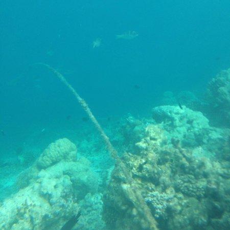 Vilamendhoo Island Resort & Spa: Граница рифа