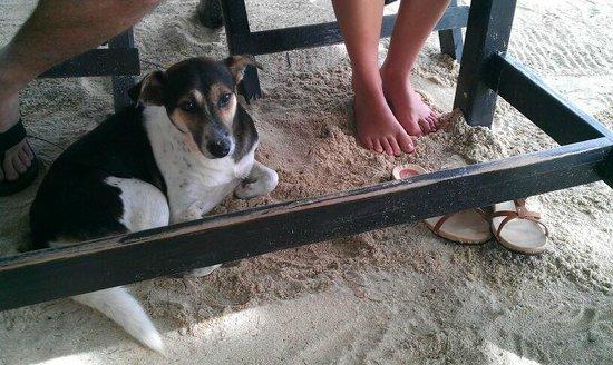 Central Cottage Resort: Ontbijt met je voeten in het zand en.. een zwerfhondje!