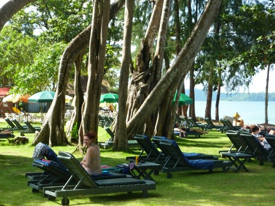 Khaolak Merlin Resort: Würgefeigen als Schattenspender