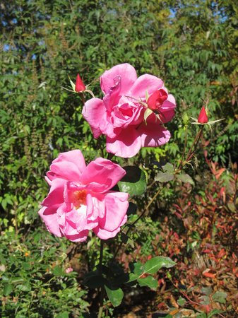 University of North Carolina: Flowers in bloom in Nov.