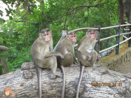 Monkeys at Elephanta caves