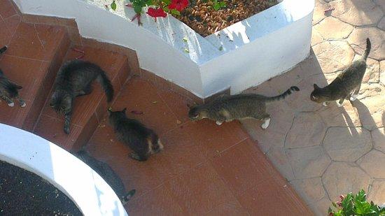 HL Paradise Island : cats