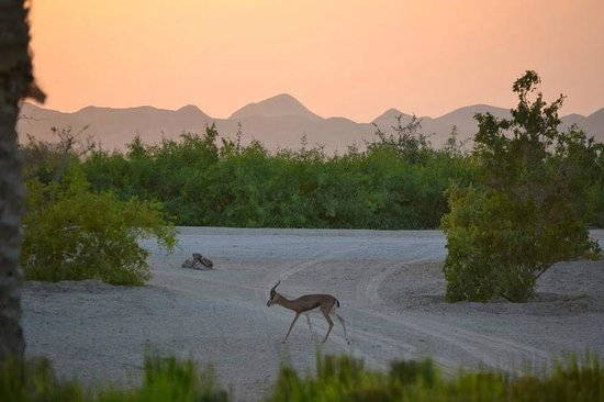 Anantara Sir Bani Yas Island Al Yamm Villa Resort : Sunset over the mountains as viewed from villa patio.