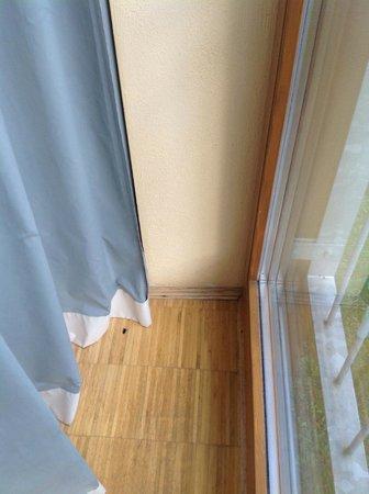 Hotel Hofgut Imsbach: Tote Mücke hinter Vorhang