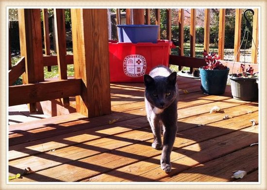 Fairhaven Guesthouse : wonderful side porch and friendly kitty