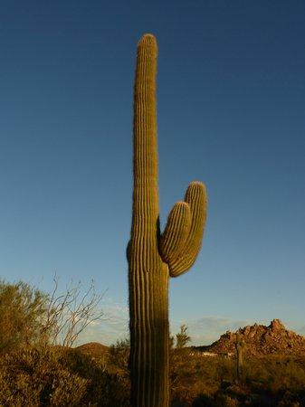 Talavera: Saguaro Cactus on resort property