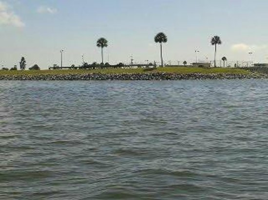 Dolphins Tour Brevard County