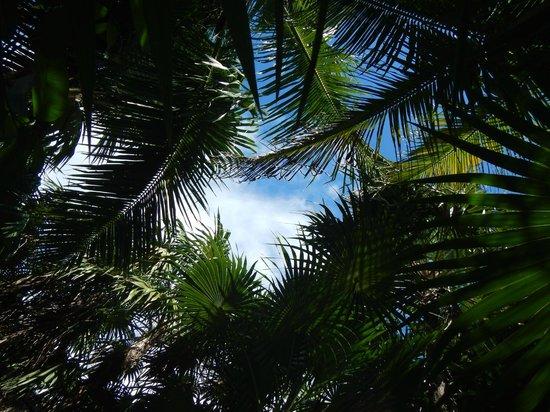 Las Palmas Maya : View from reception