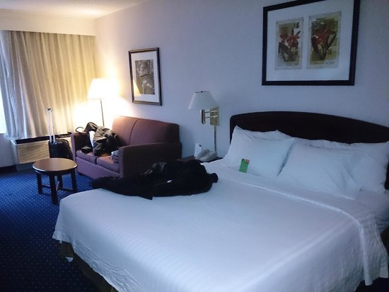 Courtyard by Marriott Toronto Downtown : Habitacion