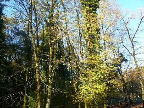 Au Bois Dormant : vue de la chambre située au rez de chaussée